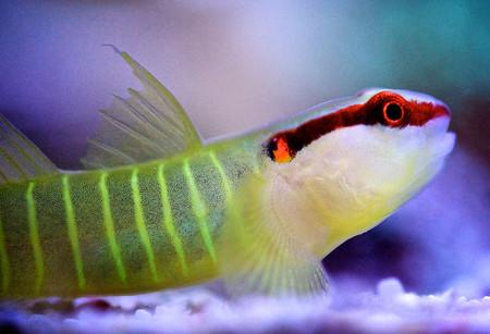 Удивительный мир кораллов: Макрофотографии Феликса Салазара — фото 15