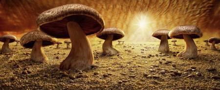 Уникальные пейзажи из еды Карла Уорнера — фото 5