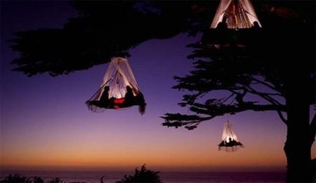 Платформу подвешивают к дереву на высоте 300 метров