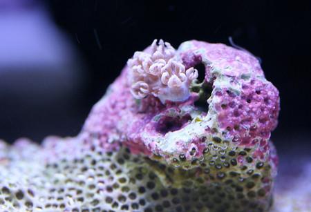 Удивительный мир кораллов: Макрофотографии Феликса Салазара — фото 10
