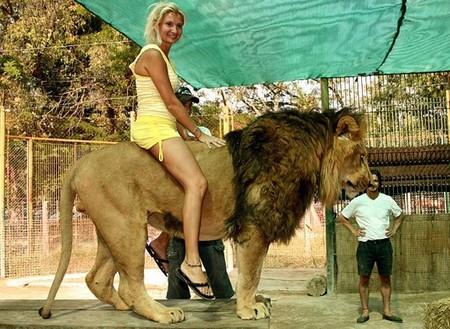 И даже оседлать льва