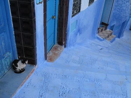 Кошек в городке видимо тоже хватает )