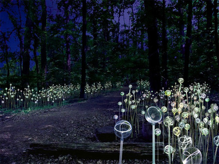 Лесные светлячки )