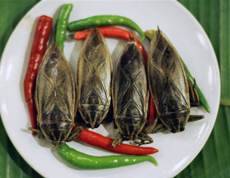 По вкусу водные клопы напоминают мясо креветок
