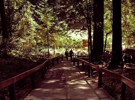 Находится зона в лесу