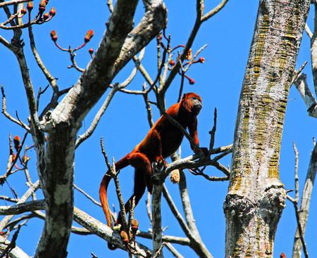 Вот она дикая природа Амазонии