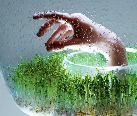 Свежая зелень всегда под рукой