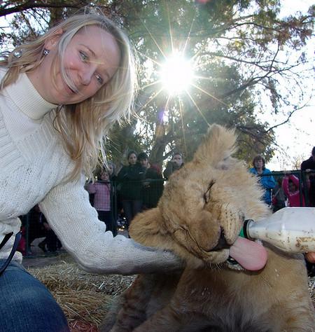Хищных зверушек в зоопарке можно даже с рук покормить