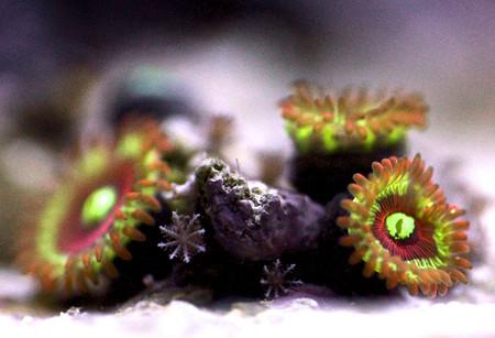 Удивительный мир кораллов: Макрофотографии Феликса Салазара — фото 8