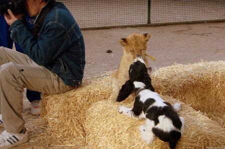 Дружба с домашними животными
