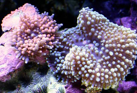 Удивительный мир кораллов: Макрофотографии Феликса Салазара — фото 11