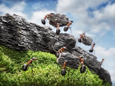 Беда в муравейнике