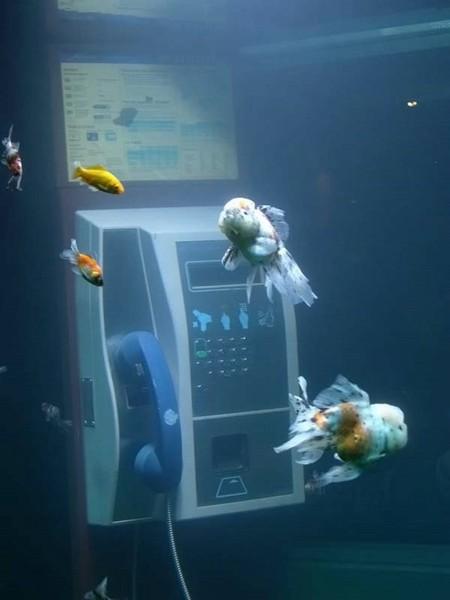Стать обитателями стеклянного домика выпала честь экзотическим рыбкам