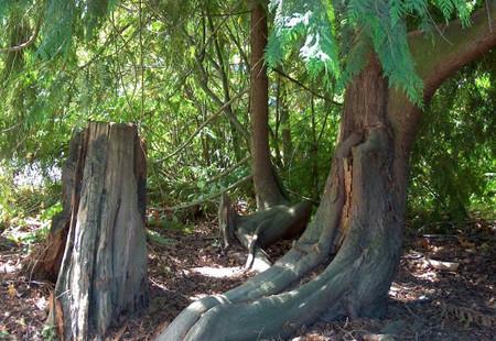 Деревья также здесь имеют необычную форму