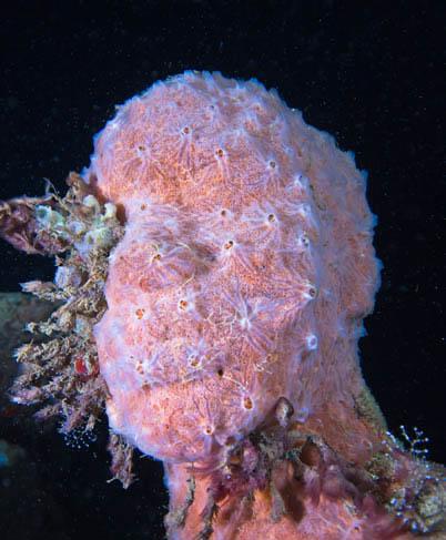 Скульптура обросшая кораллами