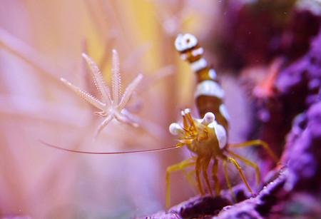Удивительный мир кораллов: Макрофотографии Феликса Салазара — фото 17