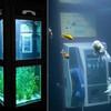 Аквариум в телефонной будке: креативный арт-объект Буфалино и Дизея