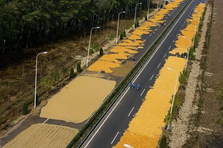Китай. На трассе в окрестностях Пекина китайцы сушат кукурузу (Вы еще хотите китайской кукурузы?)