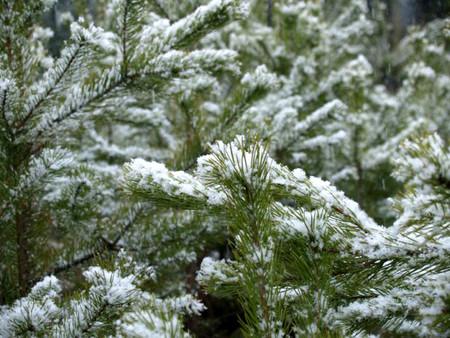 Первомайский снеговик — фото 4