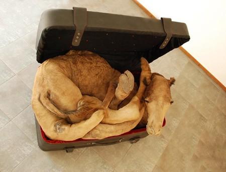Хума Муджи: мертвые животные на защите природы — фото 1