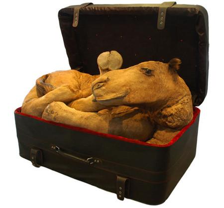 Хума Муджи: мертвые животные на защите природы — фото 7