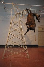 Хума Муджи: мертвые животные на защите природы — фото 4