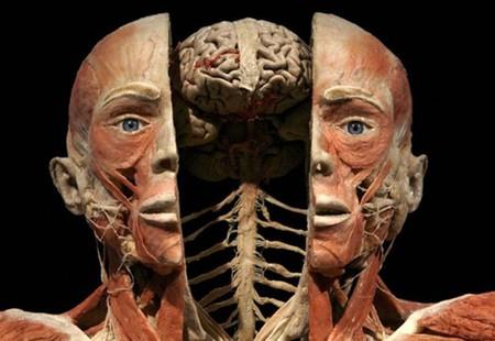 """Выставка человеческих останков  - """"Миры тела"""" — фото 1"""