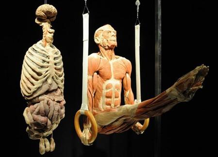 """Выставка человеческих останков  - """"Миры тела"""" — фото 3"""