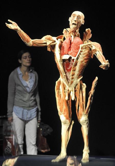 """Выставка человеческих останков  - """"Миры тела"""" — фото 2"""