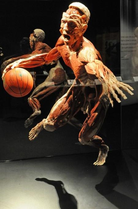"""Выставка человеческих останков  - """"Миры тела"""" — фото 4"""