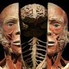 """Выставка человеческих останков  - """"Миры тела"""""""