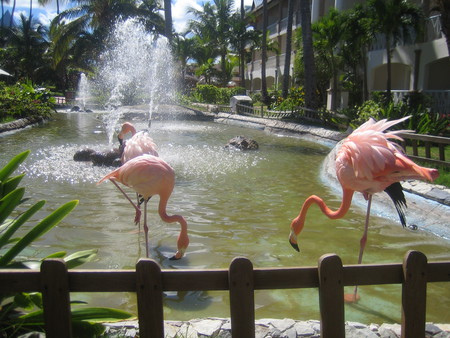 Привет из Доминиканы — фото 16