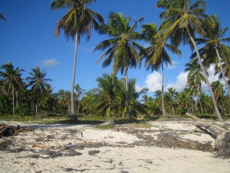 Привет из Доминиканы — фото 6