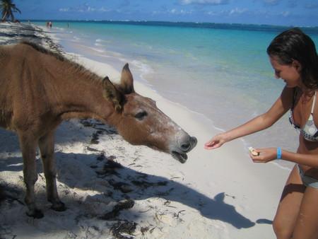 Привет из Доминиканы — фото 31