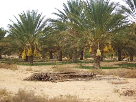 Поездка в Сахару. — фото 3