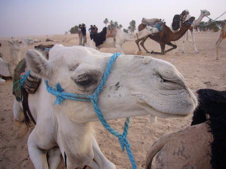 Поездка в Сахару. — фото 1