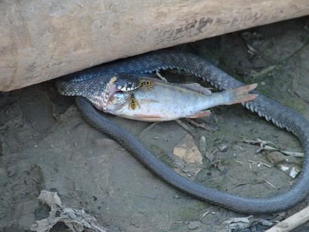 Рыбалка в Астрахани — фото 2