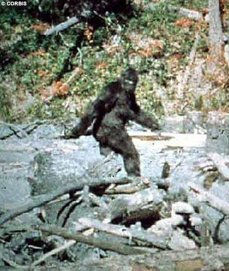 В документальном фильме Паттерсона-Гимлина в 1967 году, запечатлена женская особь американского «снежного человека»- бигфута, что является до сего момента единственным достаточно качественным фото- свидетельством существования на нашей планете живых реликтовых гоминидов. Однако также существует изрядное количество некачественных, смазанных снимков, для научного анализа не пригодных. Это доказательство того, насколько нелегкими объектами для фотографирования являются эти приматы.