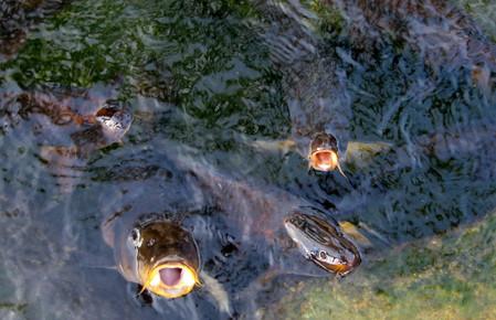 Все еще растущая рыбка.