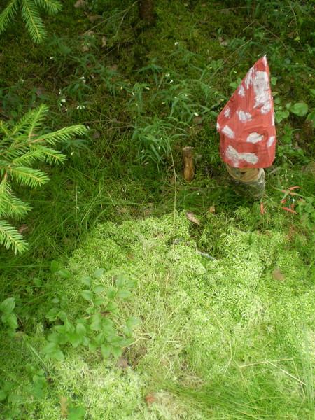 В лесу ничуть не хуже... — фото 2