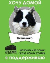 «Выставочные пространства Лофт Проекта ЭТАЖИ в очередной раз будут отданы не под объекты искусства, а под вольеры с кошками и собаками из разных приютов Петербурга.»