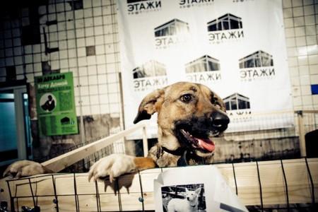 «Если Вы не можете взять домой кошку или собаку, но очень хотите помочь их братьям и приюту, то приносите на акцию: — Ошейники на средних собак, кожа/брезент — Поводки 1,5-3 м с хорошими, легко открывающимися карабинами — Пластиковые лежанки (корыта) для собак №4, 5, 6 — Хозяйственные перчатки (х/б и резиновые) — Пластиковые ведра — Моющие средства типа Мистер Мускул, Доместос — Гель для мытья посуды — Стиральный порошок (автомат и обычный) — Бахилы — Куски линолеума — Куски ковровых покрытий — Ветошь — Одеяла (не ватные), покрывала — Корм для кошек — ХИЛС, про план, роял конин. (!!! не китикет, не вискес и др.!!!) — Лежанки для кошек — Крупа — Лакомства для кошек и собак — Овёс проросший — Игрушки — Когтеточки, домики — Подстилки — бу покрывала — Ватные диски — Одноразовые смотровые перчатки. размер 6,5»