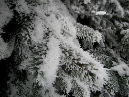 Волшебное Рождество или Не было бы счастья да несчастье помогло — фото 2