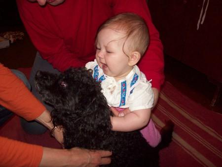 Собака в доме — фото 1