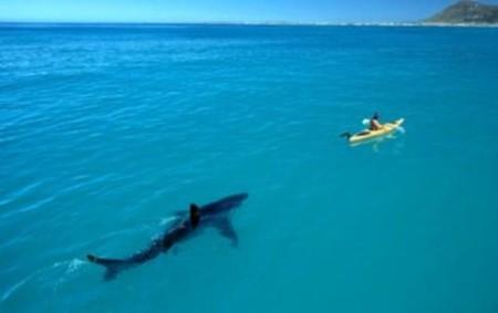 Акула – героиня аквахоррора, или над чем боимся, господа? — фото 5