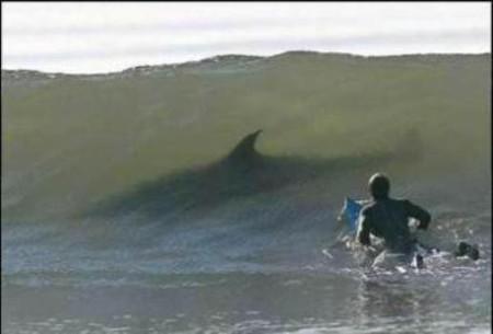 Акула – героиня аквахоррора, или над чем боимся, господа? — фото 6