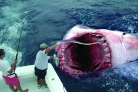 В принципе, это все те же самые акулы, но это тот случай, где размер имеет первостепенное значение.