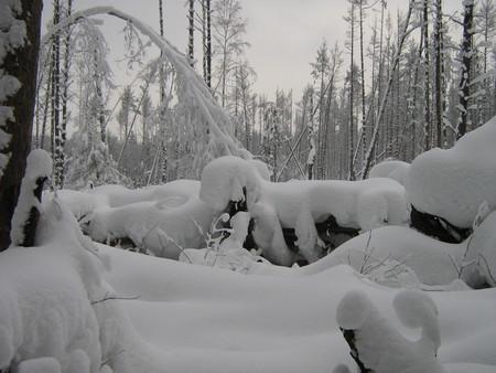 Лыжи, чистый воздух, нагрузки, которые легко регулировать самостоятельно — фото 2