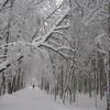 Лыжи, чистый воздух, нагрузки, которые легко регулировать самостоятельно