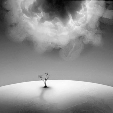 Последнее дерево
